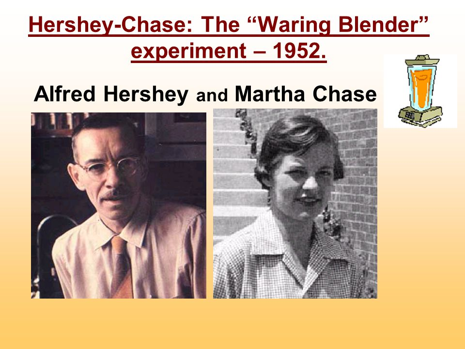 Hershey-Chase: The Waring Blender experiment – 1952.