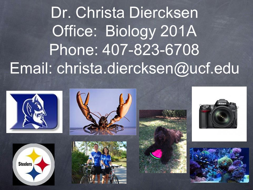 Dr. Christa Diercksen Office: Biology 201A Phone: 407-823-6708 Email: christa.diercksen@ucf.edu