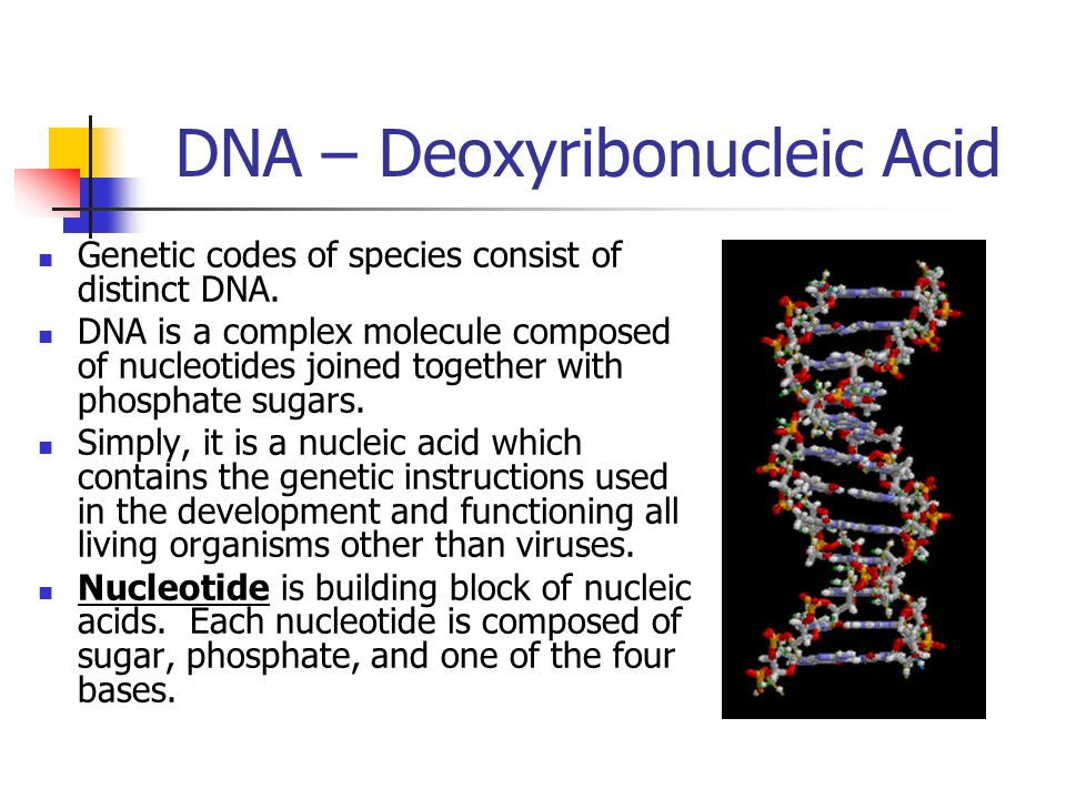 DNA – Deoxyribonucleic Acid