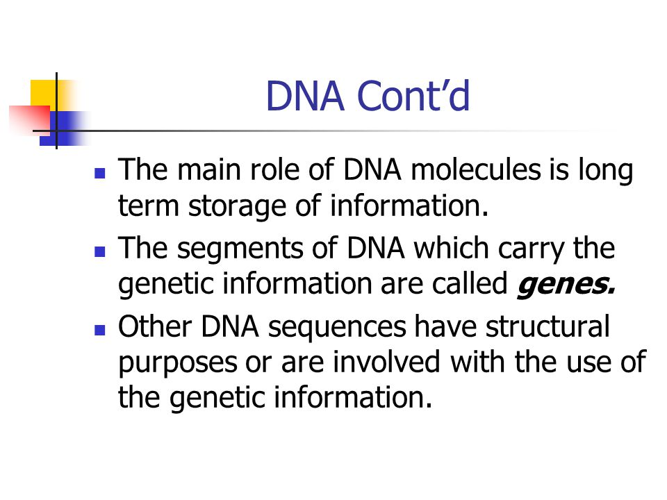 DNA Cont'd The main role of DNA molecules is long term storage of information.