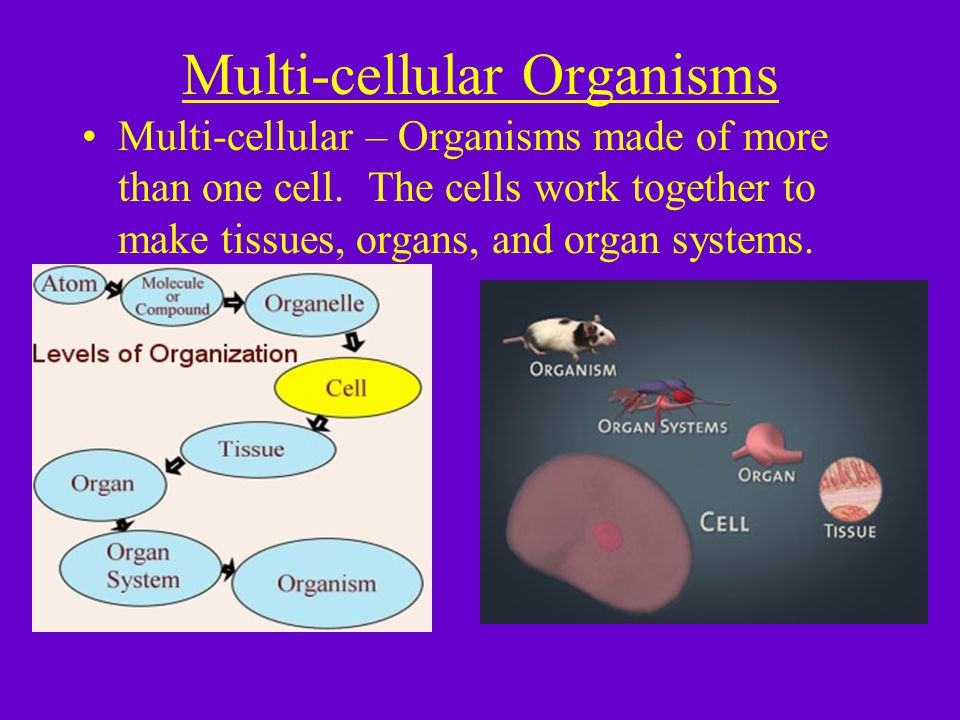 Multi-cellular Organisms