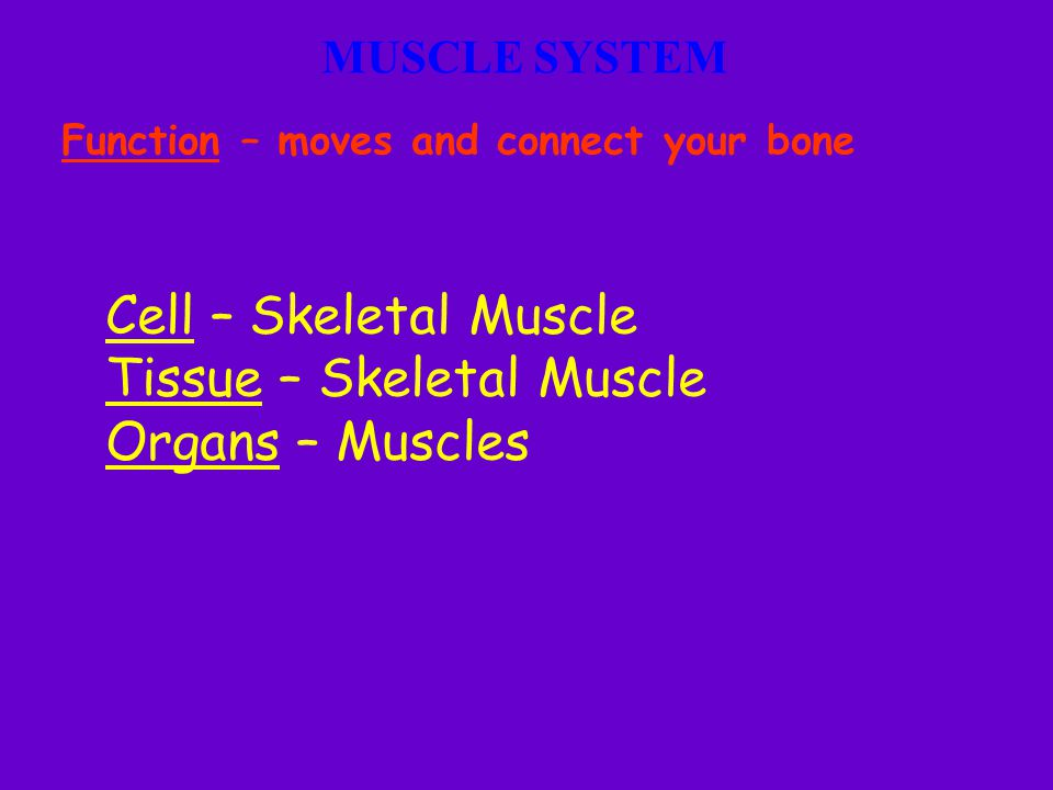 Tissue – Skeletal Muscle Organs – Muscles