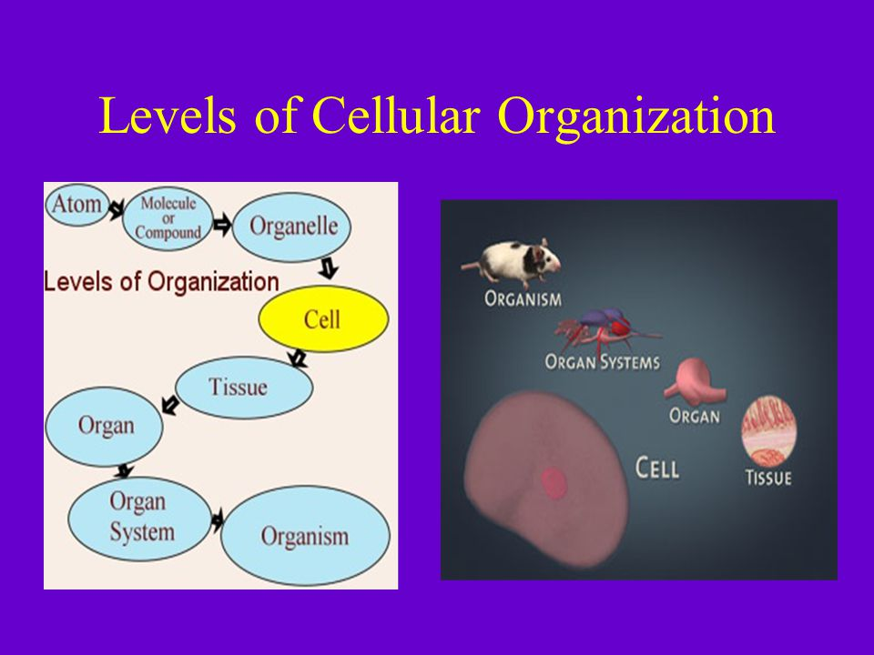 Levels of Cellular Organization