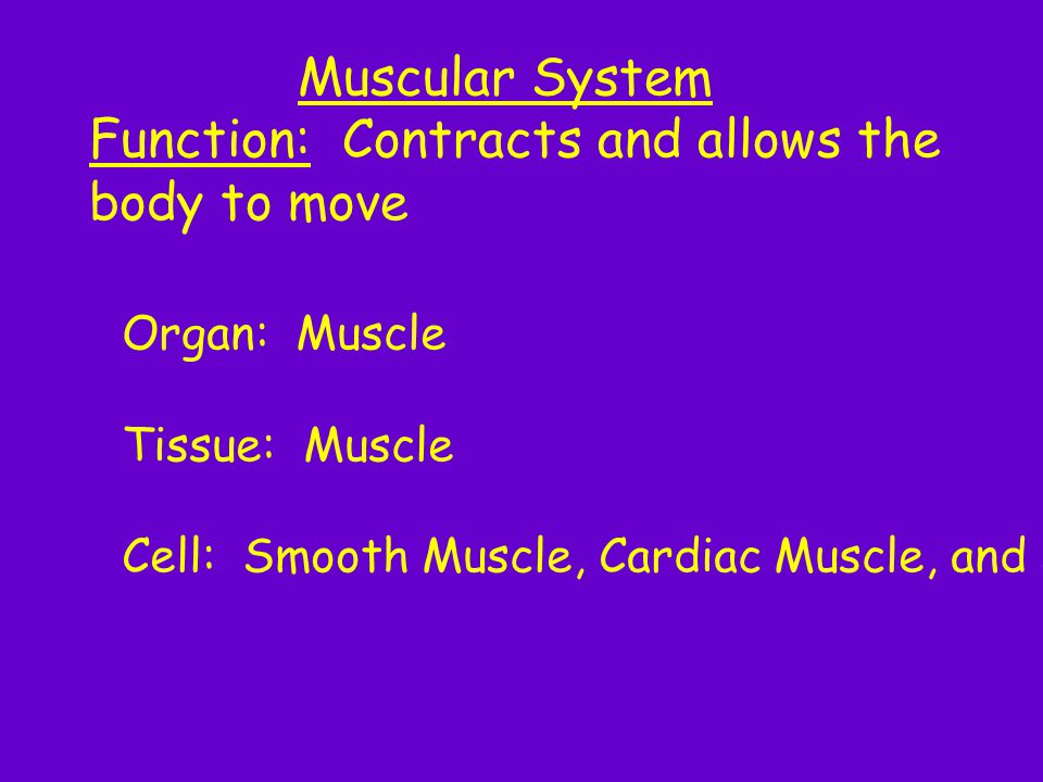 Function: Contracts and allows the body to move