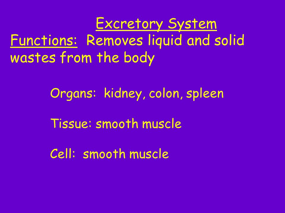 Functions: Removes liquid and solid wastes from the body