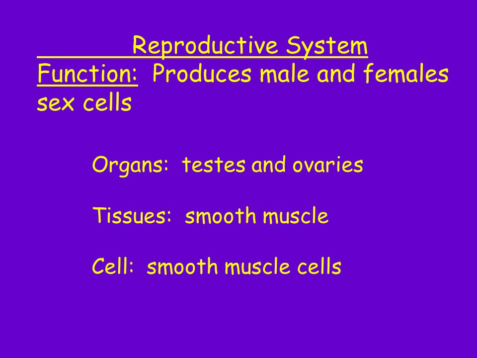 Function: Produces male and females sex cells