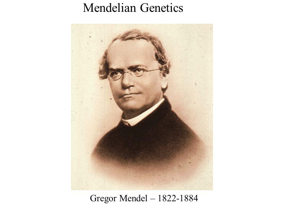 Mendelian Genetics Gregor Mendel – 1822-1884