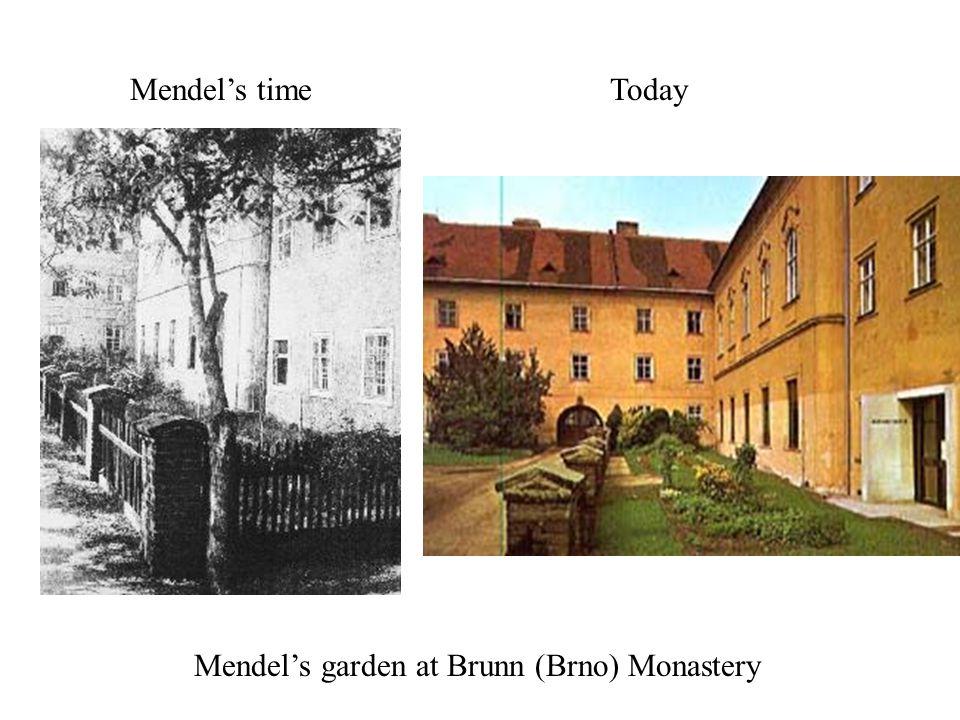 Mendel's time Today Mendel's garden at Brunn (Brno) Monastery