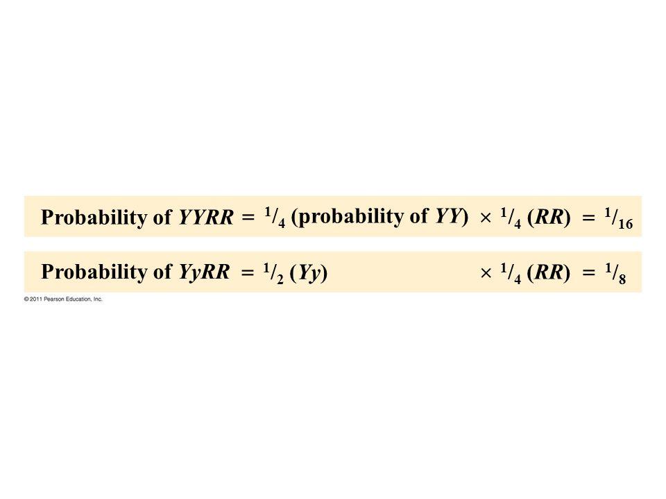 Probability of YYRR  1/4 (probability of YY)  1/4 (RR)  1/16