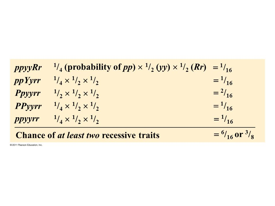 1/4 (probability of pp)  1/2 (yy)  1/2 (Rr)  1/16 ppYyrr