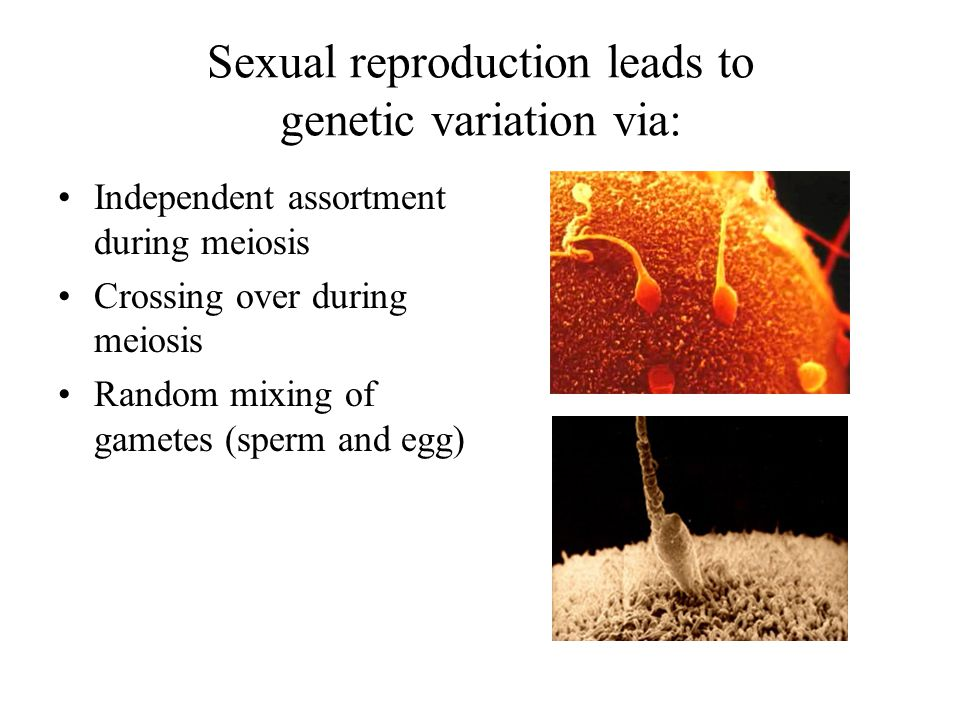 Sexual reproduction leads to genetic variation via: