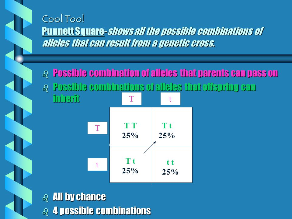 Possible combination of alleles that parents can pass on