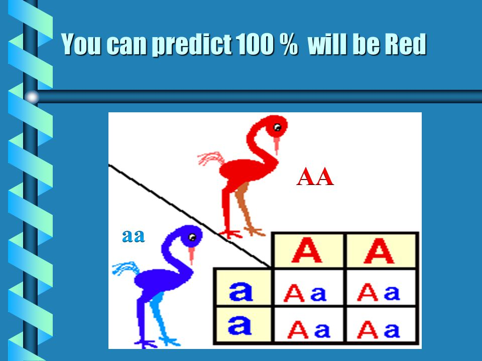 You can predict 100 % will be Red
