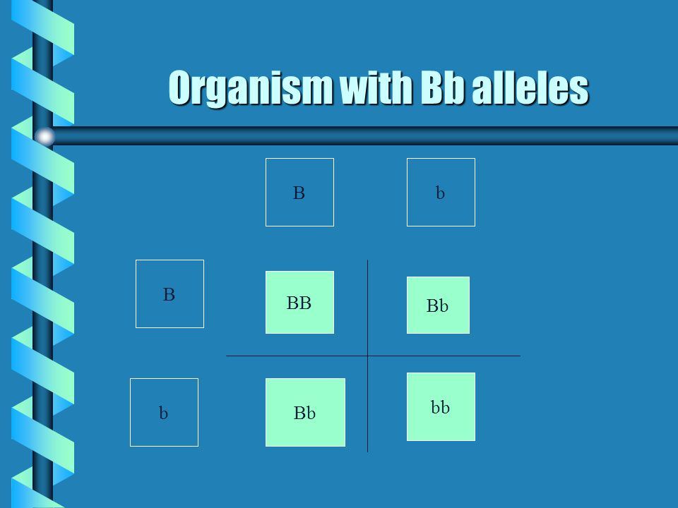 Organism with Bb alleles