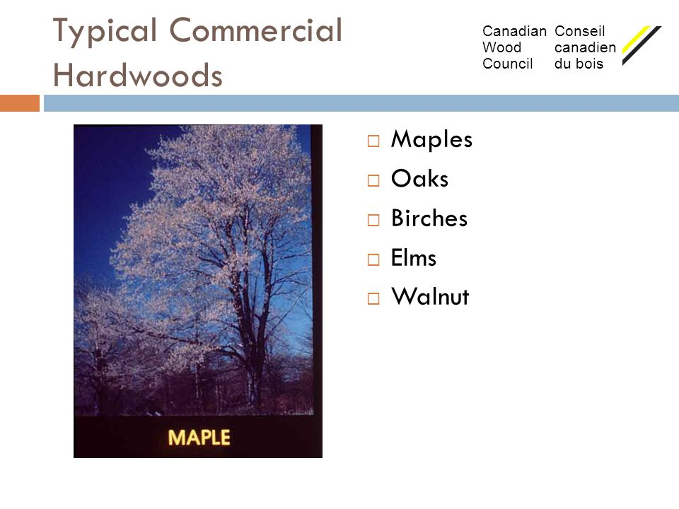 Typical Commercial Hardwoods