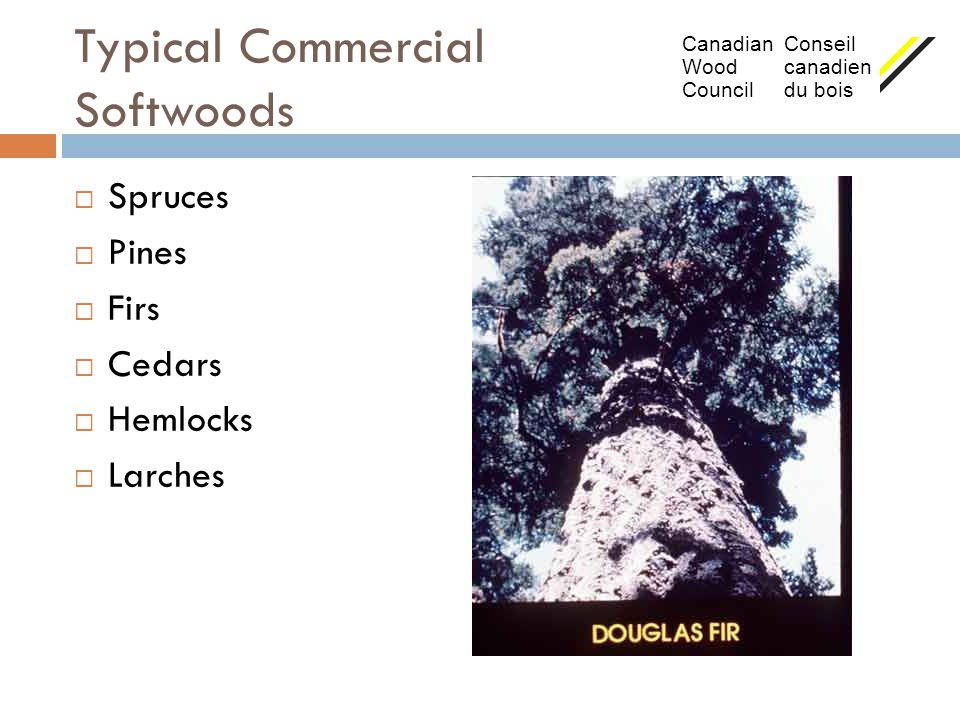 Typical Commercial Softwoods