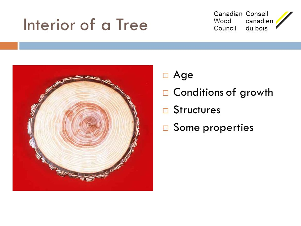 Interior of a Tree Age Conditions of growth Structures Some properties
