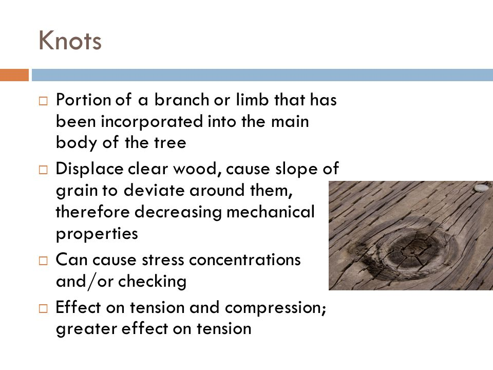 Knots Portion of a branch or limb that has been incorporated into the main body of the tree.