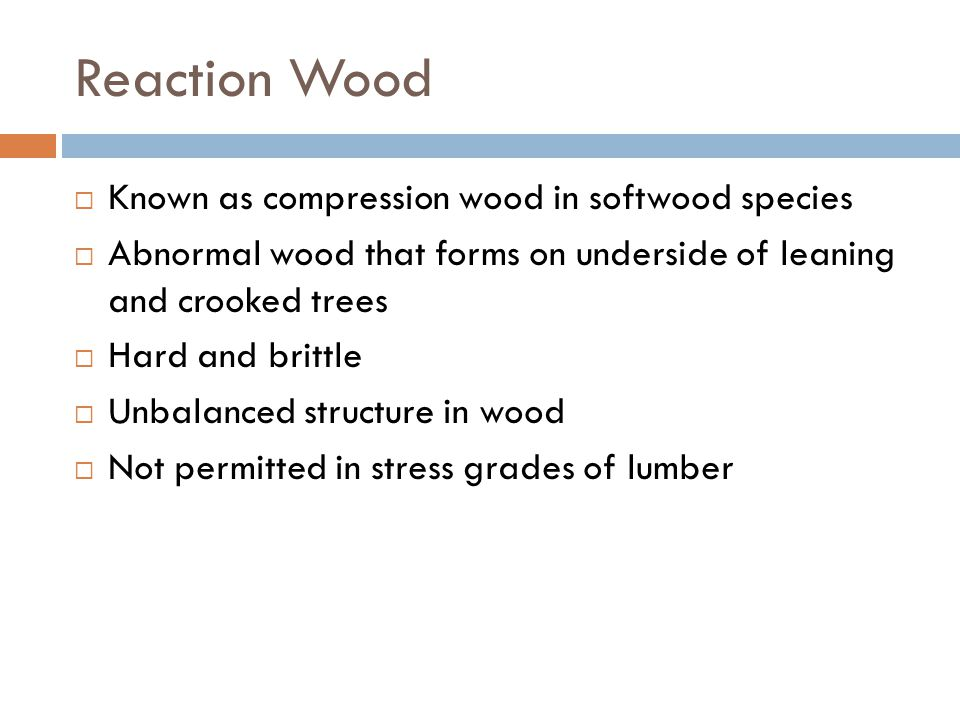 Reaction Wood Known as compression wood in softwood species