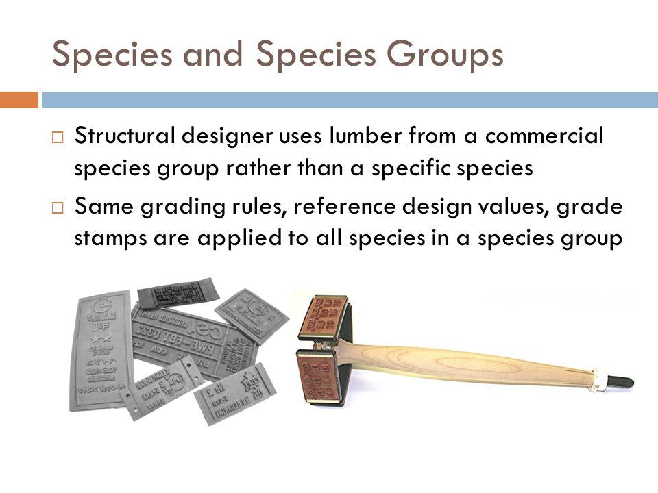 Species and Species Groups