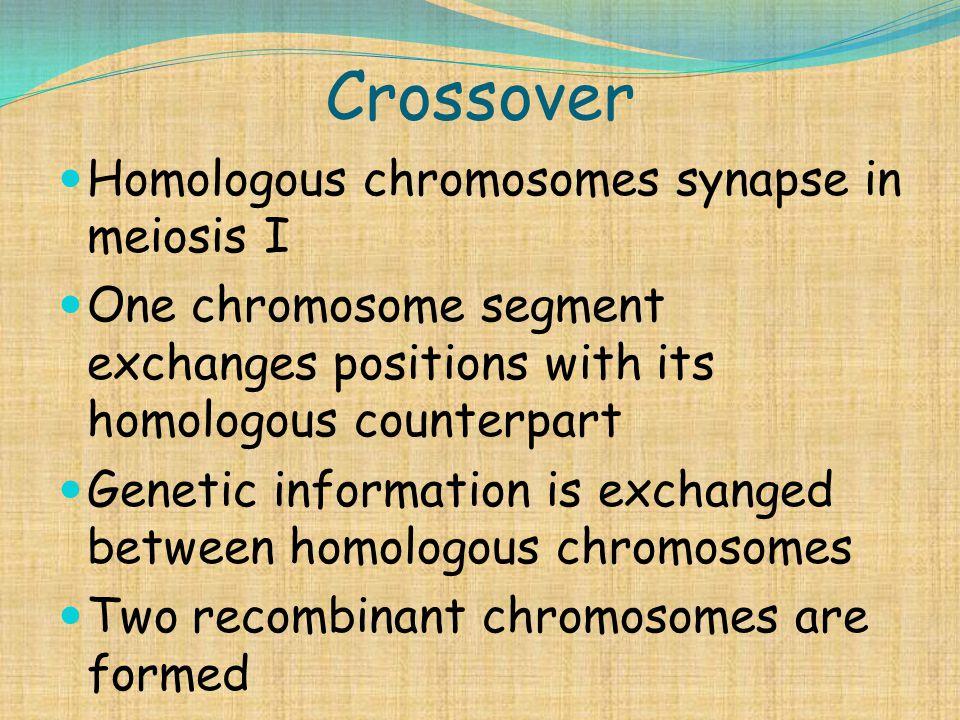 Crossover Homologous chromosomes synapse in meiosis I