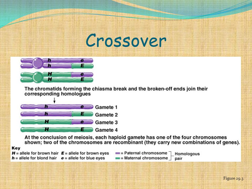 Crossover Figure 29.3