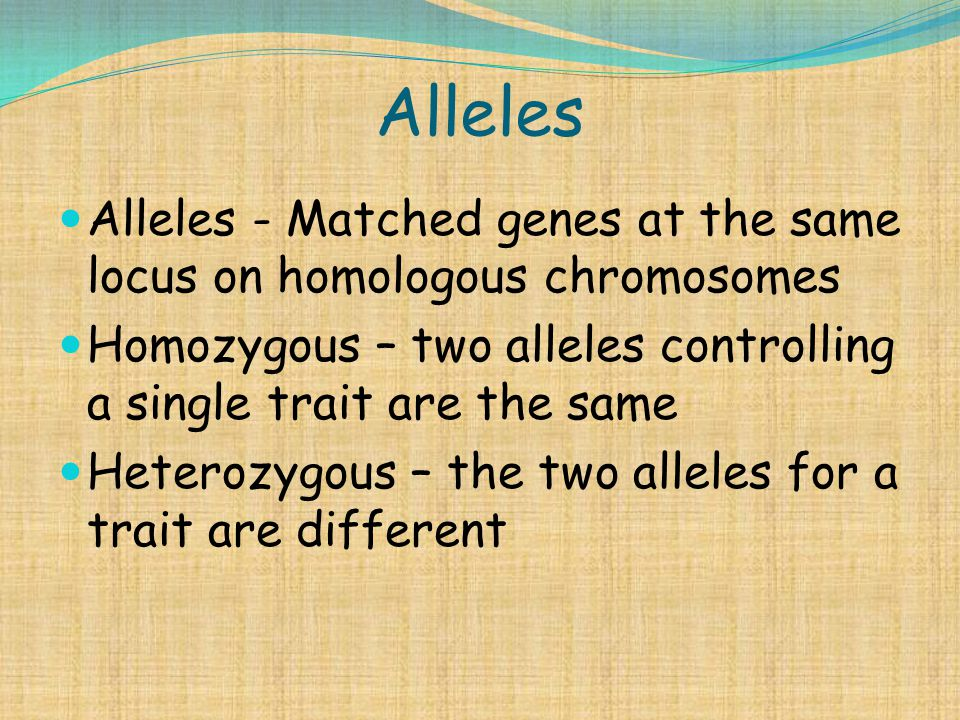 Alleles Alleles - Matched genes at the same locus on homologous chromosomes. Homozygous – two alleles controlling a single trait are the same.