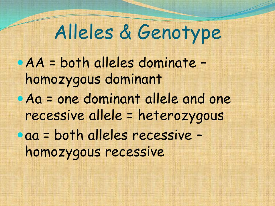 Alleles & Genotype AA = both alleles dominate – homozygous dominant