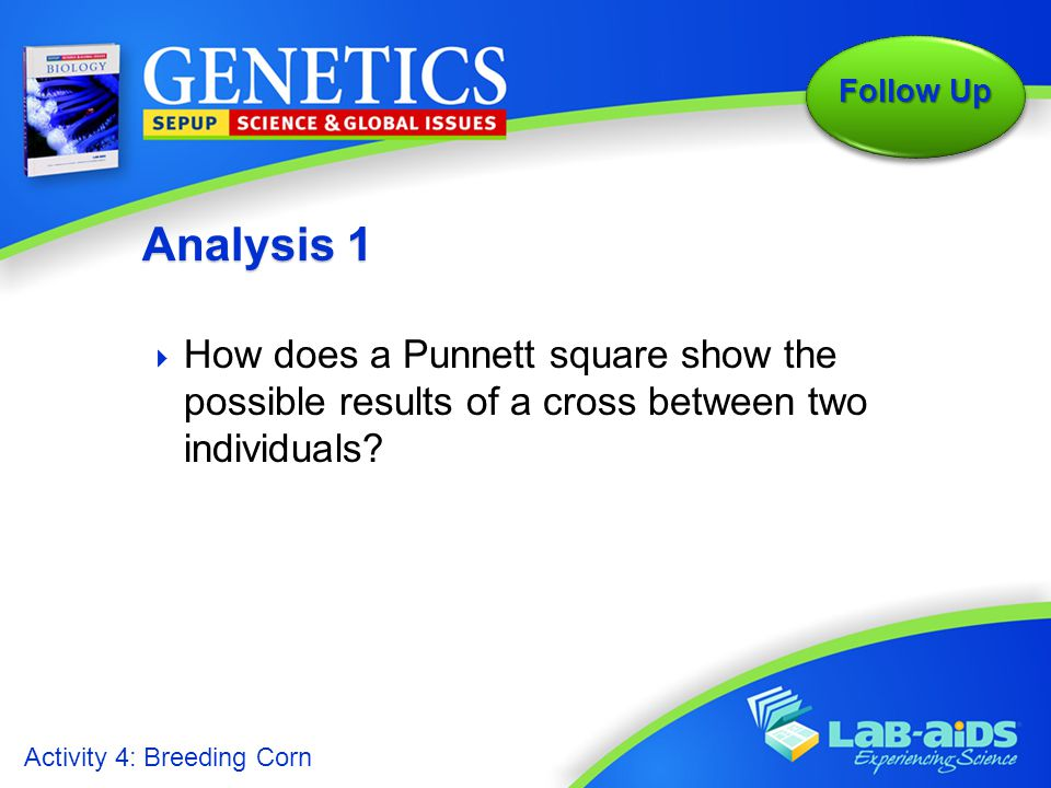 Analysis 1 How does a Punnett square show the possible results of a cross between two individuals