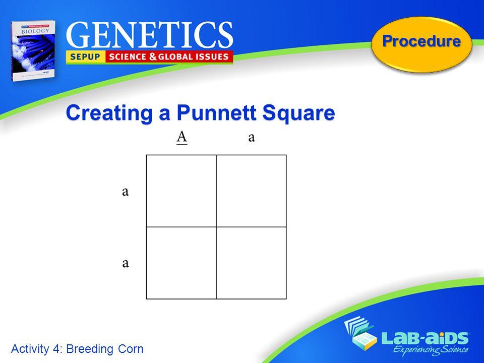 Creating a Punnett Square