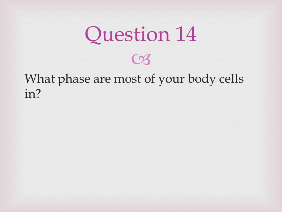 Question 14 What phase are most of your body cells in