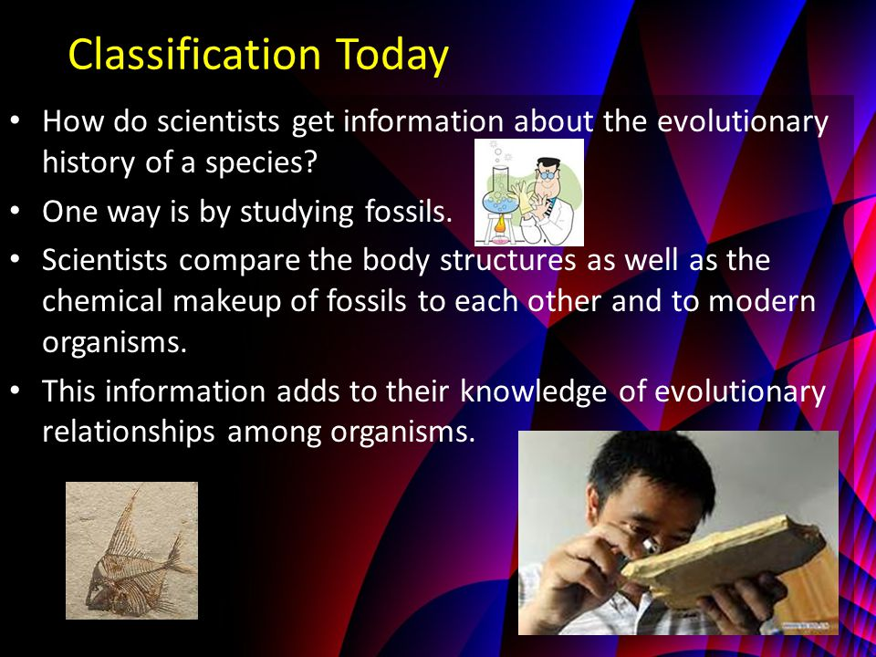 Classification Today How do scientists get information about the evolutionary history of a species