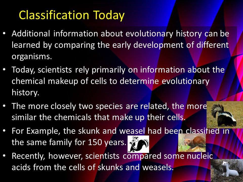 Classification Today Additional information about evolutionary history can be learned by comparing the early development of different organisms.