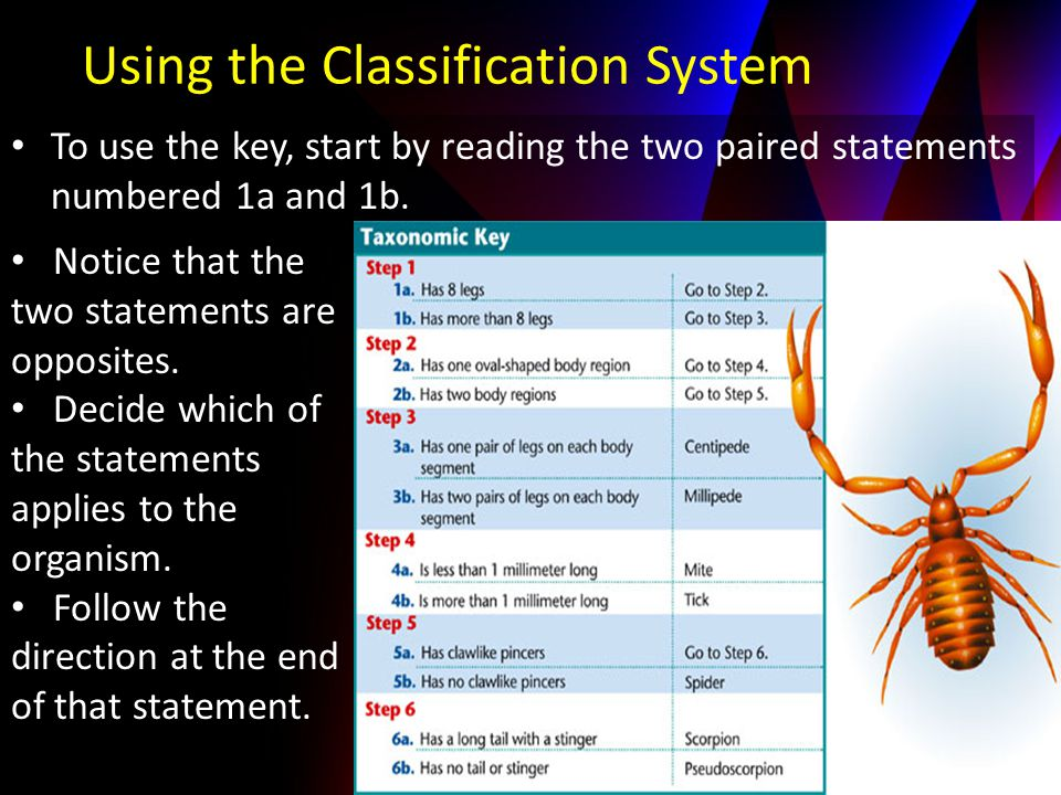Using the Classification System