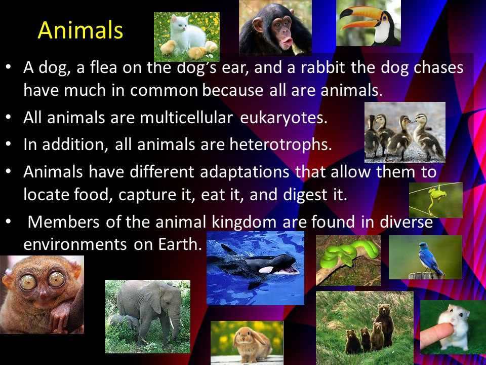 Animals A dog, a flea on the dog's ear, and a rabbit the dog chases have much in common because all are animals.