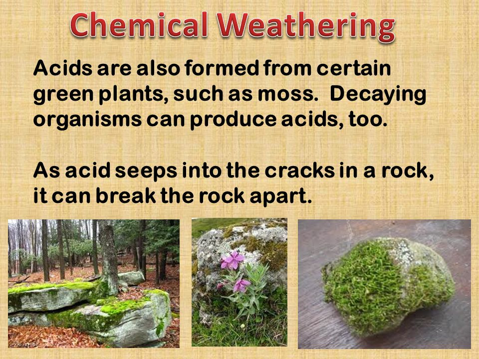 Chemical Weathering Acids are also formed from certain green plants, such as moss. Decaying organisms can produce acids, too.