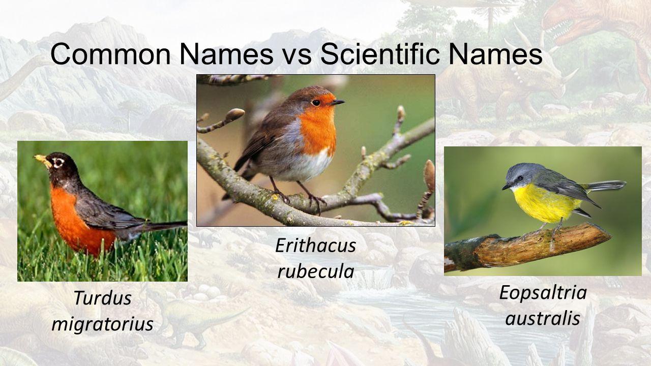 Common Names vs Scientific Names