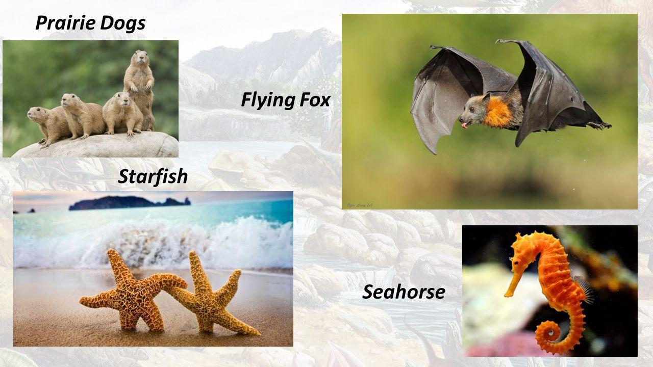 Prairie Dogs Flying Fox Starfish Seahorse