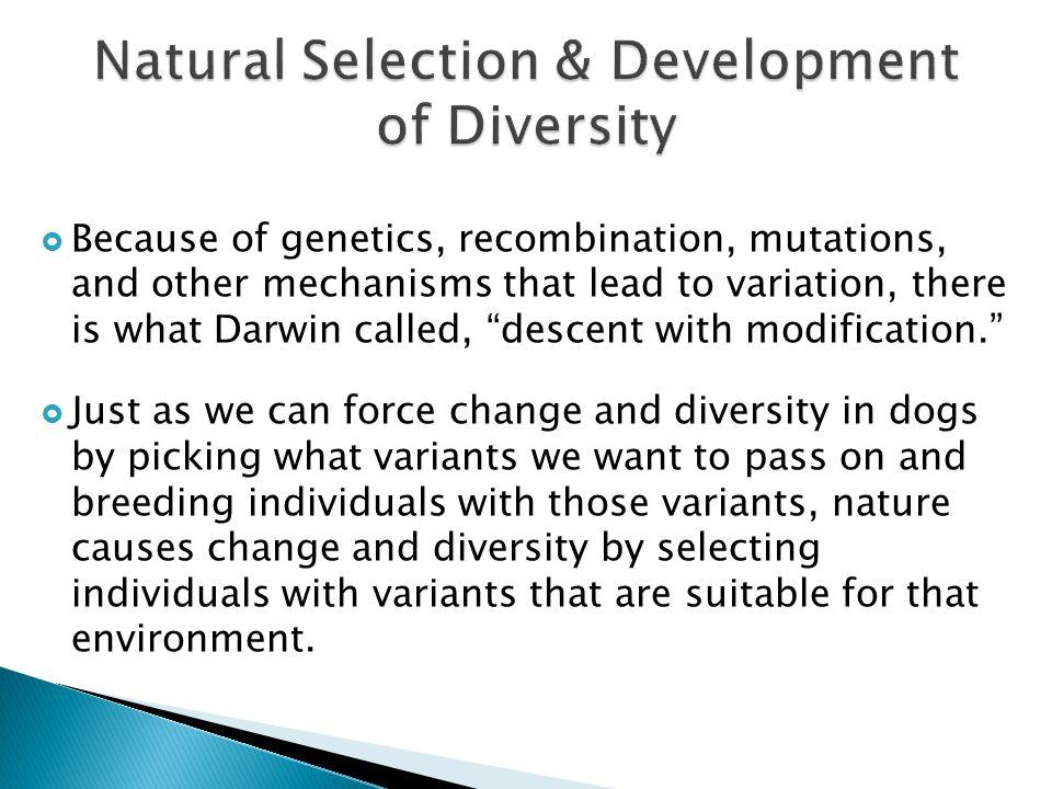 Natural Selection & Development of Diversity