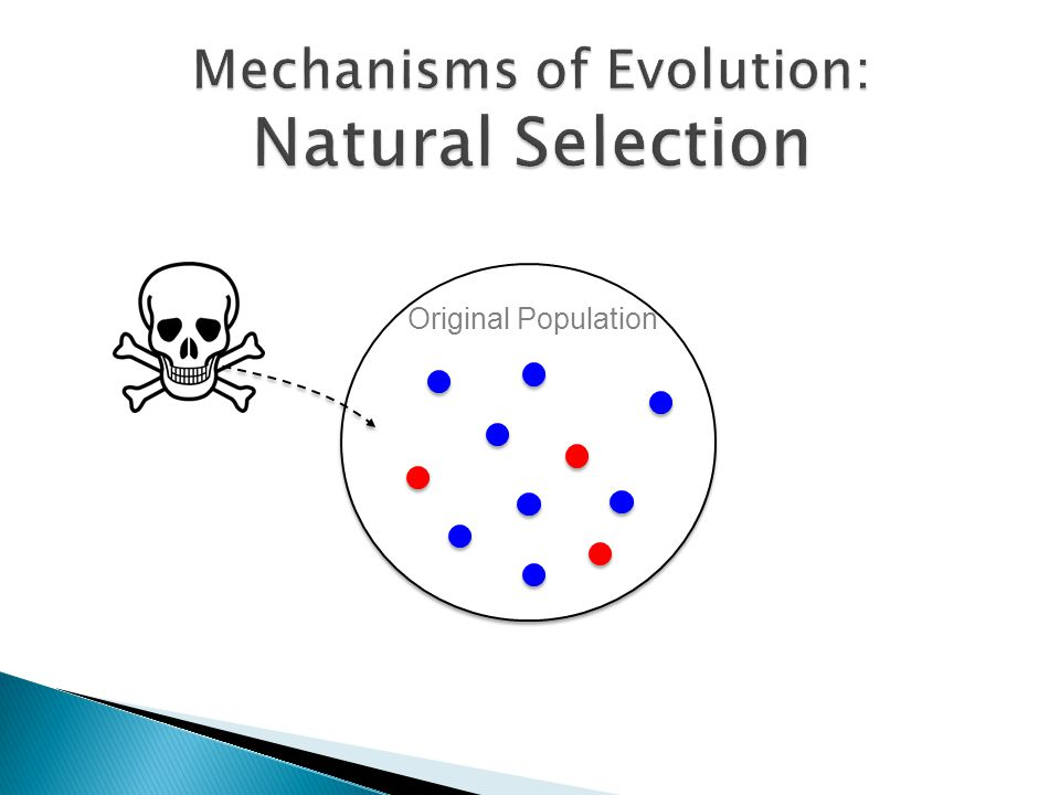 Concepts Of Natural And Group Selection