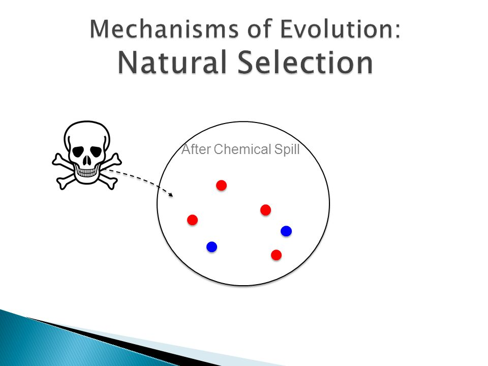 Mechanisms of Evolution: Natural Selection