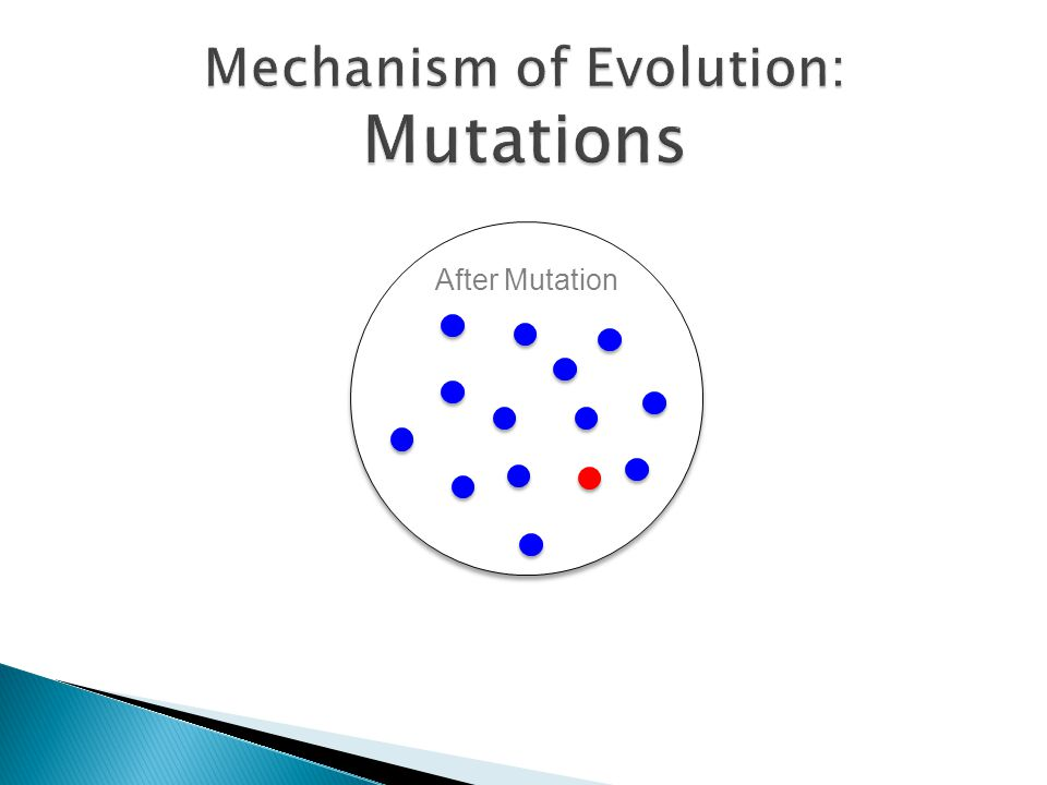 Mechanism of Evolution: Mutations