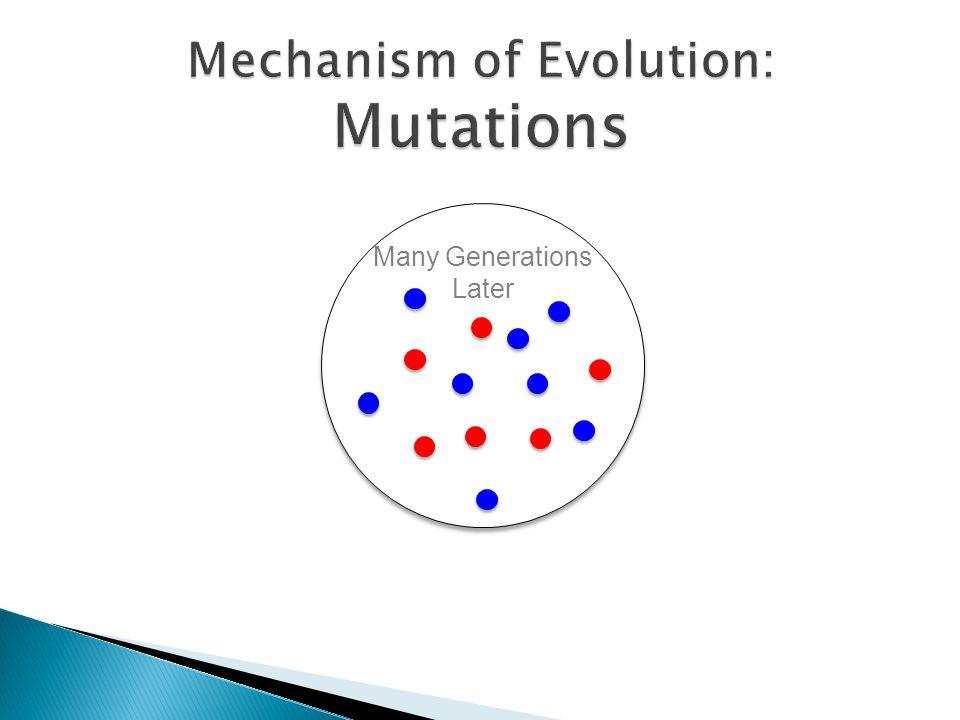 Mechanism of Evolution: Mutations
