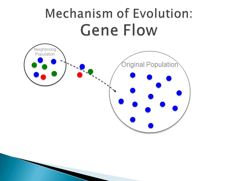 Gene flow definition and example