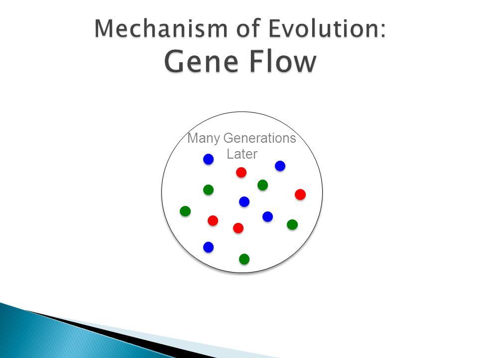 Mechanism of Evolution: Gene Flow