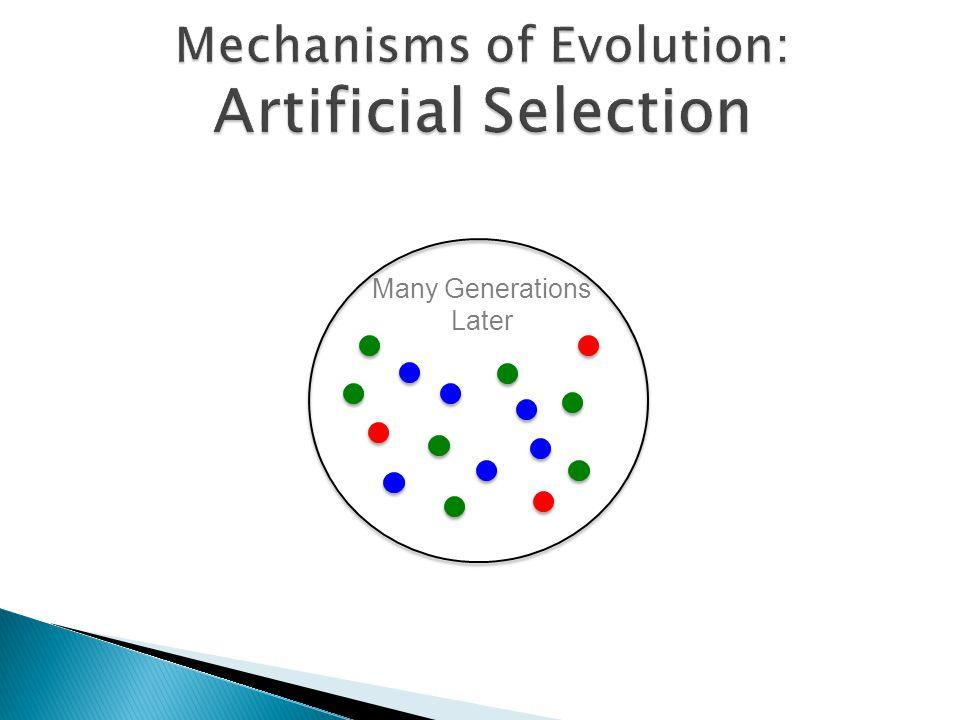 Mechanisms of Evolution: Artificial Selection