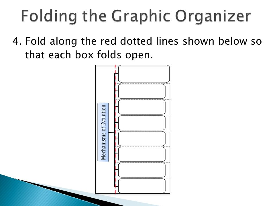 Folding the Graphic Organizer