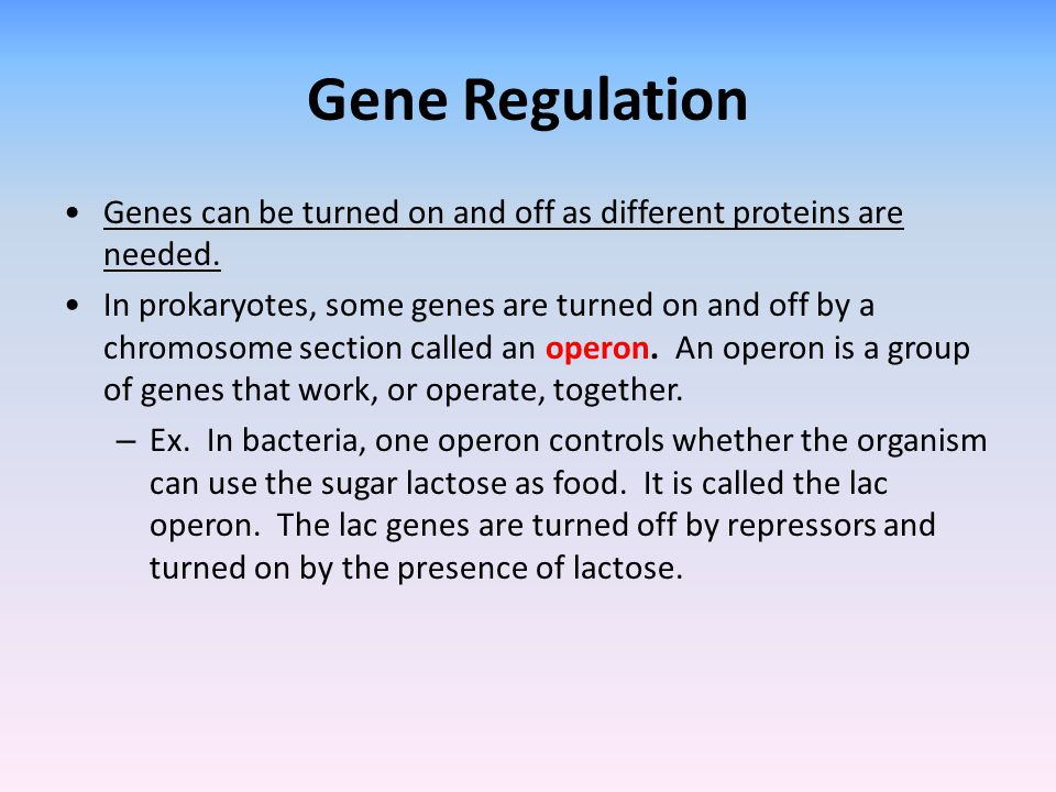 Gene Regulation Genes can be turned on and off as different proteins are needed.