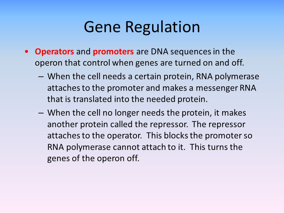 Gene Regulation Operators and promoters are DNA sequences in the operon that control when genes are turned on and off.