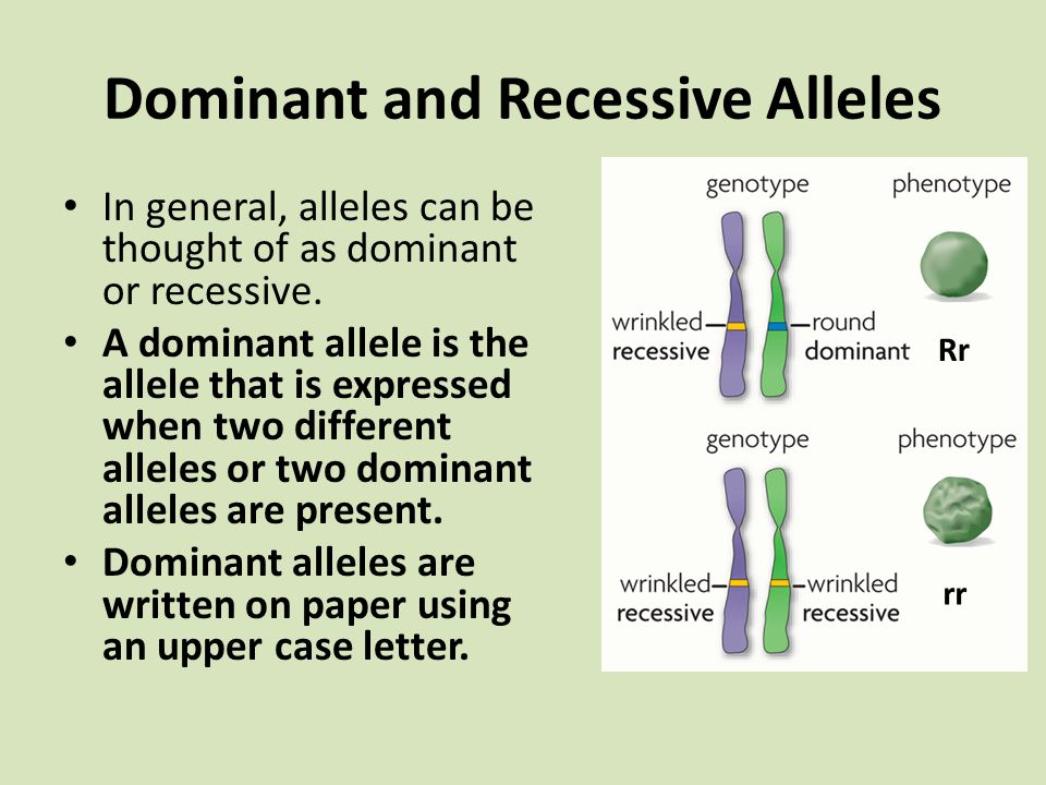 Traits, Genes, and Alleles - ppt video online download